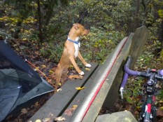 Yam's first camping trip